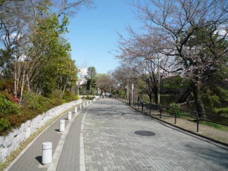 グランドメゾン石神井公園パークフロント 前面道路